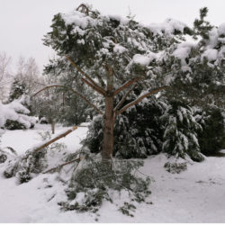 Des dégâts un peu partout au jardin en cet hiver 2020-2021